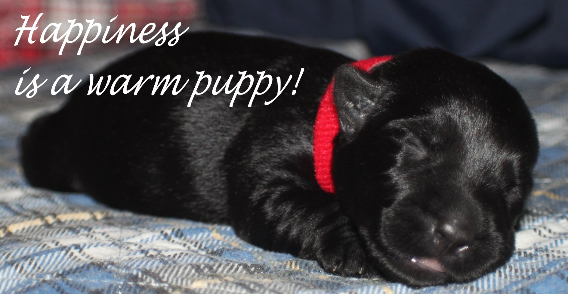 Happiness IS A Warm Puppy!